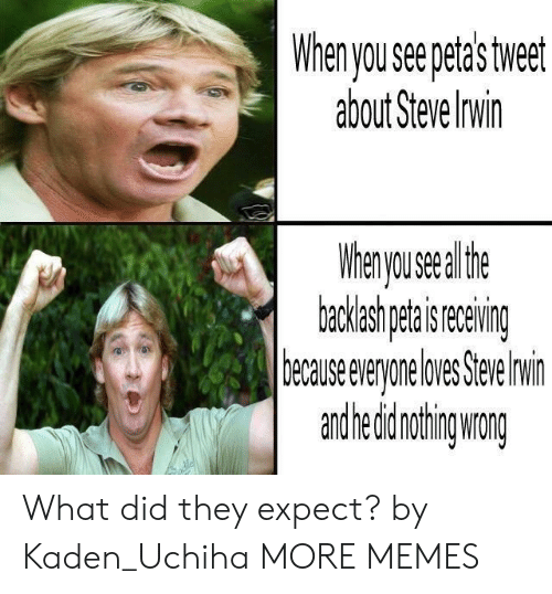 Dank, Memes, and Target: yseepetastwet  about Steve Invin  Whernyousealthf  ecauseeveyoeloes Sewin  andhedidnohing wang What did they expect? by Kaden_Uchiha MORE MEMES