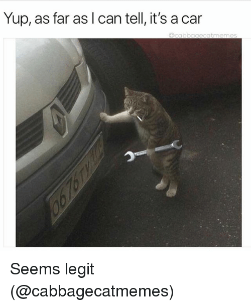 Funny, Car, and Can: Yup, as far as I can tell, it's a car  oecatmemes Seems legit (@cabbagecatmemes)