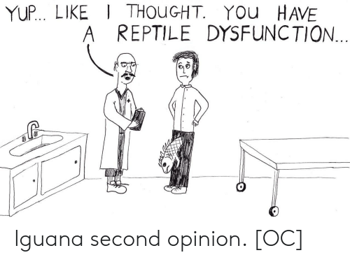 Thought, A Reptile, and Iguana: YUP.. LIKE THOuGHT. YOu HAVE  A REPTILE DYSFUNCTION Iguana second opinion. [OC]