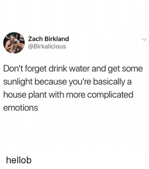 House, Water, and Sunlight: Zach Birkland  @Birkalicious  Don't forget drink water and get some  sunlight because you're basically a  house plant with more complicated  emotions hellob