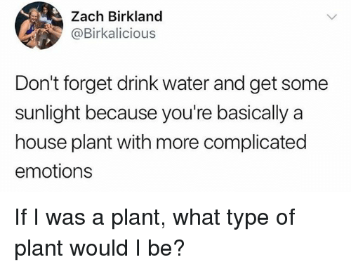 Funny, House, and Water: Zach Birkland  @Birkalicious  Don't forget drink water and get some  sunlight because you're basically a  house plant with more complicated  emotions If I was a plant, what type of plant would I be?