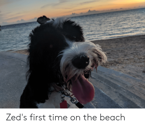 Beach, Time, and The Beach: Zed's first time on the beach