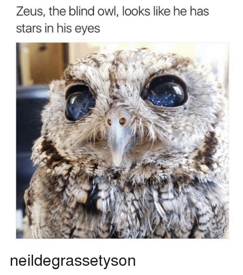 Memes, Zeus, and 🤖: Zeus, the blind owl, looks like he has  stars in his eyes neildegrassetyson