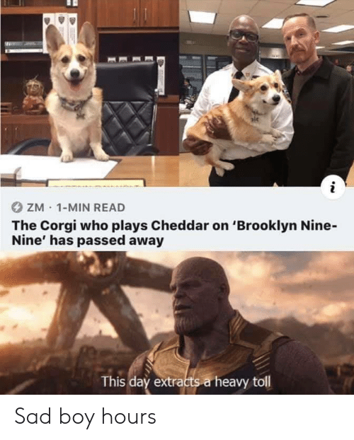 Corgi, Brooklyn, and Sad: ZM 1-MIN READ  The Corgi who plays Cheddar on 'Brooklyn Nine-  Nine' has passed away  This day extracts a heavy toll Sad boy hours
